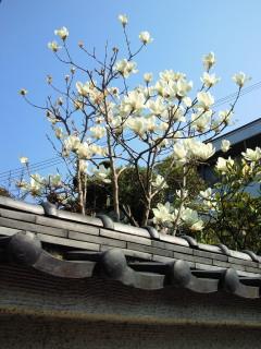春爛漫!しゅんろう七変化!(実際は六)